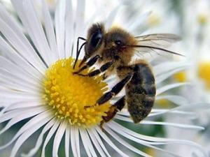 apicultura_body_24_07_07